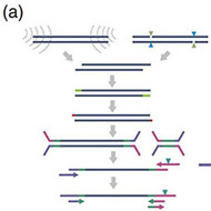 Robust Tn5 Transposase