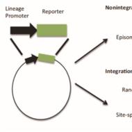 Genome Editing