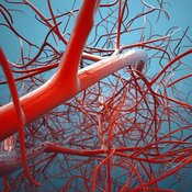 Blood Vessels