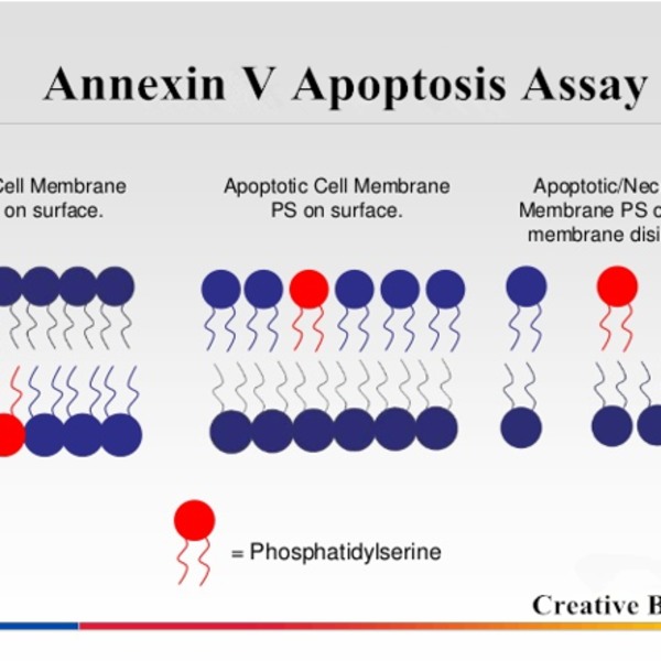 JC-1 Mitochondrial Membrane Potential Assay