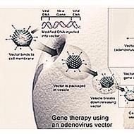 adenovirus service
