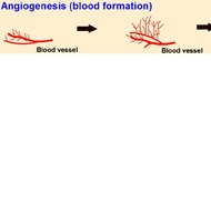angiogenesis pathway
