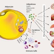 adipocytokines