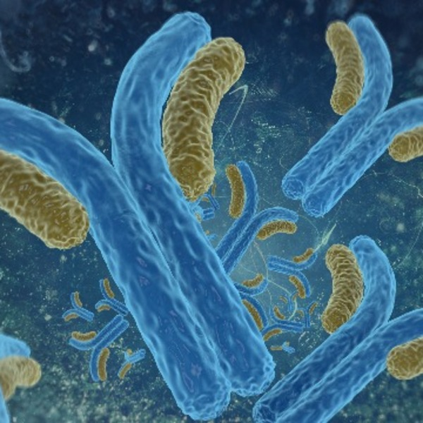 CD4bs PVL neutralizing antibodies