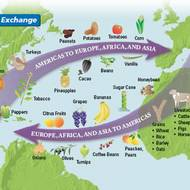 Impacts of the Columbian Exchange
