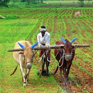 Hearths of Agriculture