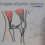 Types and Structure of Joints