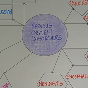 Nervous System Health and Disorders