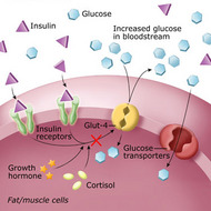 Metabolic Effects of Growth Hormone