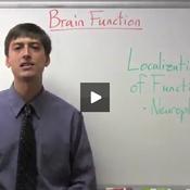 Examining Brain Function