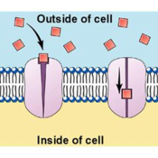 Cell membrane transport processes - Diffusion