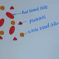 Blood: Components, Functions