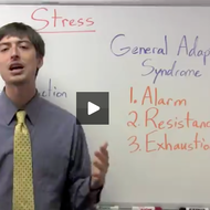 Stress Reaction and Stages