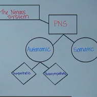 Central And Peripheral Nervous System