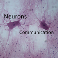 Neurons:  Communication
