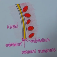 Respiration (Gas Exchange) and Transport