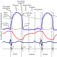 Cardiac Cycle Overview
