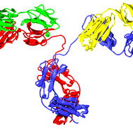 Antibody-Mediated Immunity (Humoral Immunity)