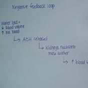 Fluid Balance and Blood Pressure