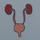 Urinary Homeostasis