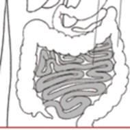 Small Intestine Structure/Function