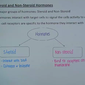 Steroid and Non-Steroid Hormones
