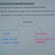 nonsteroid hormones are derived from