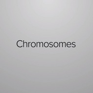 Structure of Chromosomes
