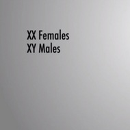 X-Linked Traits and Disorders