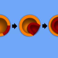 Early Development: Three Germ Layers
