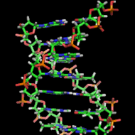 DNA:Structure- The Double Helix