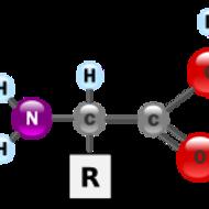 Video 3_Biomolecule Intro, Proteins & Enzymes