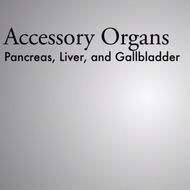 Accessory Organs: Pancreas, Gallbladder, Liver