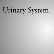 Urinary System: Structure and Function