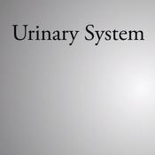 Urinary Homeostasis and Formation