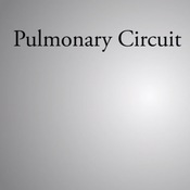Pulmonary Circuit and Systemic Circuit