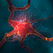 God is in the Neurons & The Grand Understanding