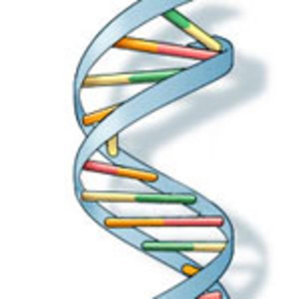 Video & Material 10: DNA & RNA