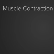Muscle Contractions: Micro Level