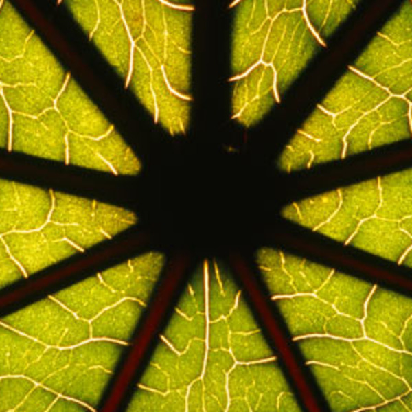 The Golden Mean and Nature's Mandalas