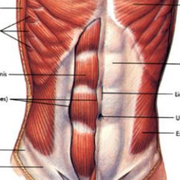 Plyometrics - Core Strength