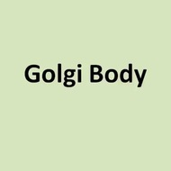 Cell Organelles: The Golgi Body