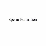 Sperm Formation