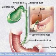 MAYO: Laparoscopic Gallbladder Removal - Looking Through the Laparoscope