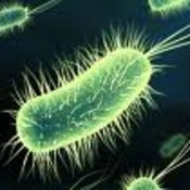 4.4 Introduction to Bacteria