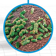 Viral Pathogenesis