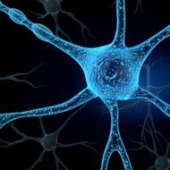 Nervous System Part 1