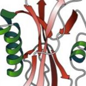 Tertiary Structure of Proteins