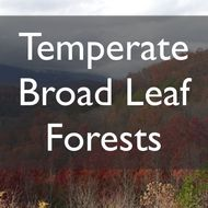 Temperate Broad Leaf Forests
