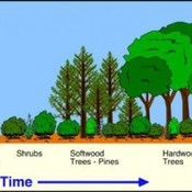 5.4 Ecological Succession